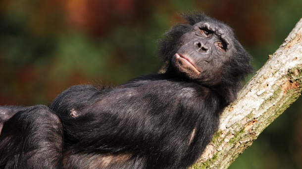 Mach dich nicht zum Affen...